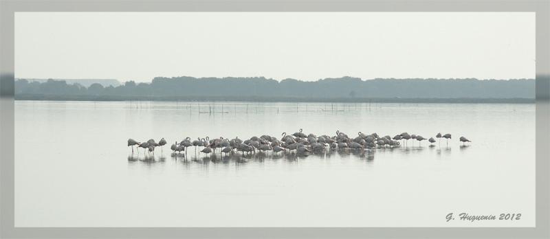 annuaire photographes suisse romande, En Camargue - http://www.gerald-huguenin.ch/Photo/ - ghuguenin de Delley-Portalban