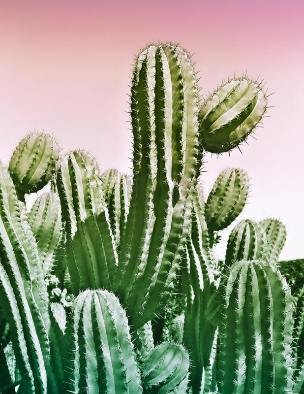 annuaire photographes suisse romande, J'aime les cactus - www.missbeli.com - Pascale de Lausanne