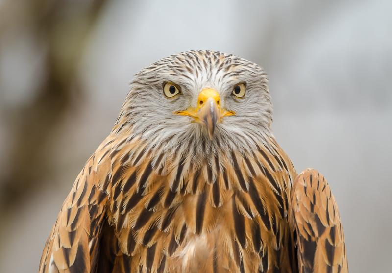 annuaire photographes suisse romande, Portrait de Milan Royal au Zoo de la Garenne. - http://philippe.belazp.com/ - Le Meuh de Courtepin